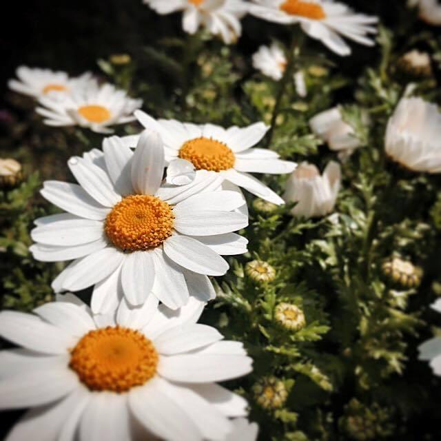 逗子のお花