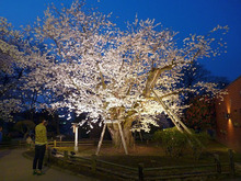 弘前公園20150422