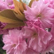 春の楽しみ