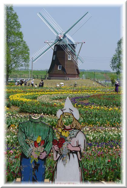 風車とチューリップ畑。のはずが…