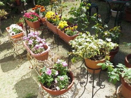2015年4月のお庭