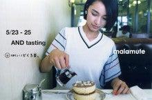 malamute AND tasting