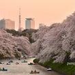 東京夜桜2015-1