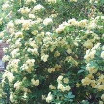 キムガーデンの花たち…