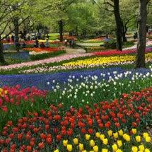 昭和記念公園チューリ…