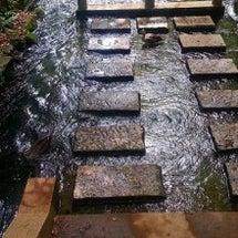 玉川上水にお散歩