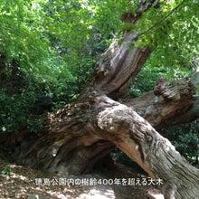 徳島公園の大木01
