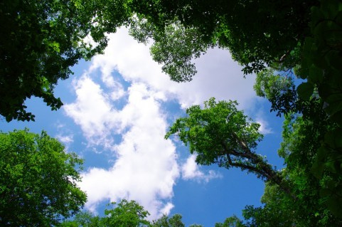 木々の間の空