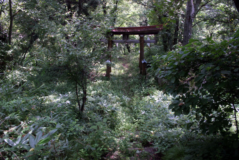 壁田城/⑤南側から見た主郭