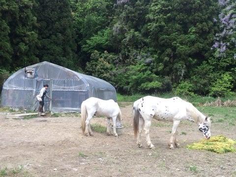 馬たちとまきちゃん