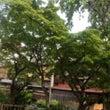 葵祭…新緑の祇園どす