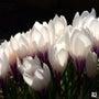春の花たち part…