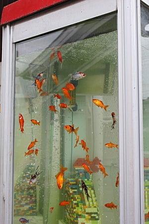 大和郡山 電話ボックスの金魚水槽