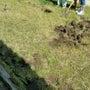 幼稚園で田んぼの土手…