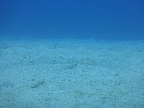奄美大島ダイビングミステリーサークル2