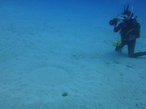 奄美大島ダイビングミステリーサークル1