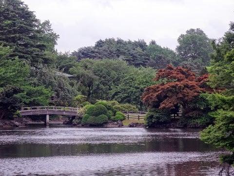 日本庭園,新宿御苑〈著作権フリー無料画像〉Free Stock Photos