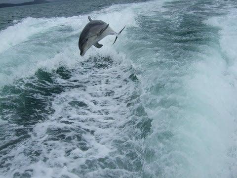 イルカ,ジャンプ,海,NZ〈著作権フリー無料画像〉Free Stock Photos