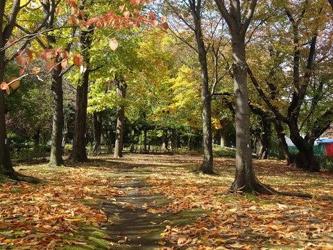紅葉,弘前公園〈著作権フリー画像〉Free Stock Photos