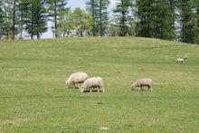 足寄町石田めん羊牧場