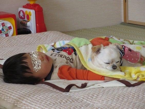 ナナとお昼寝