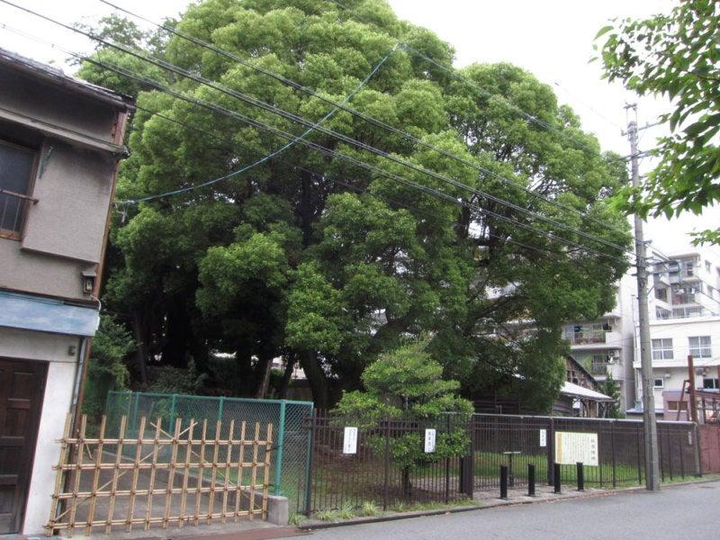 日置城/①松原緑地