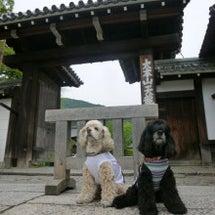 京都でお散歩♪
