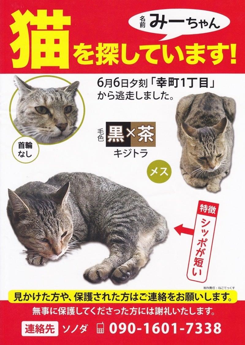 東久留米市の迷子猫