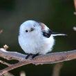 ●鳥が選んだ枝、枝が…