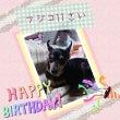 フジコ11歳のお誕生…