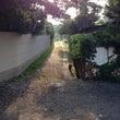 優しい夏至の日の出の…