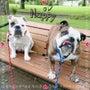 涼しい朝には公園散歩…