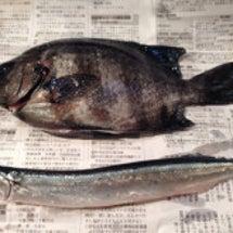 今日のお魚