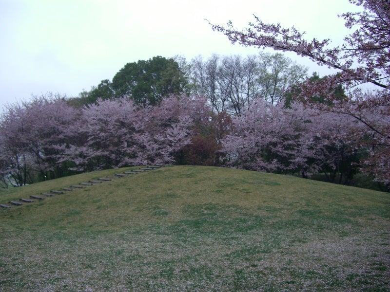 高尾桜園3