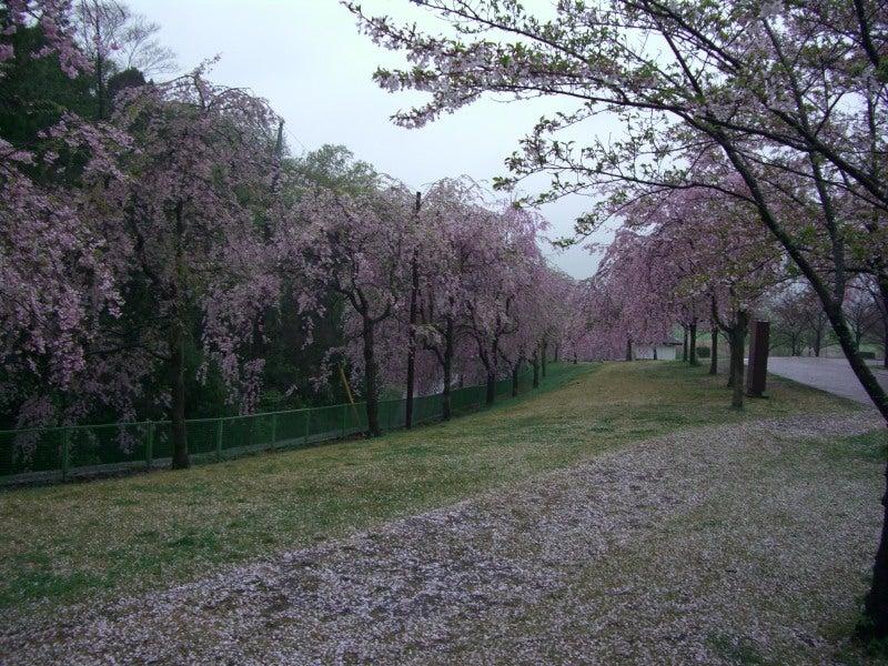 高尾桜園2