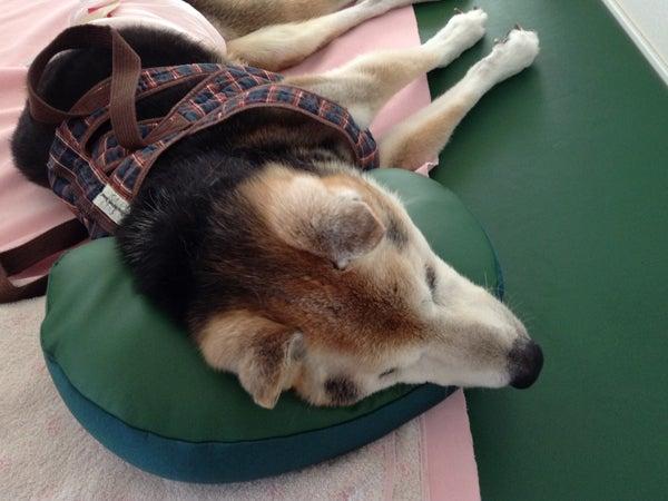 犬用低反発マットレス クッション