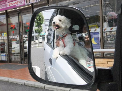 白い車の代車