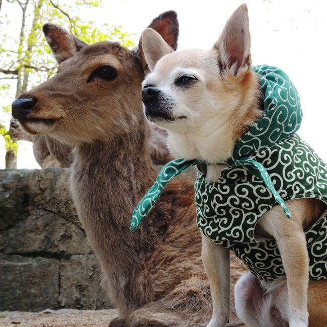 ふうこ奈良公園で鹿と