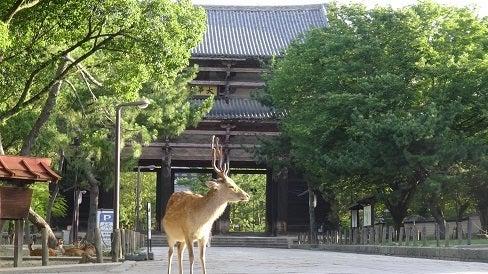 東大寺参道の鹿