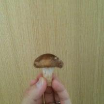 芽吹きの椎茸・串焼き…