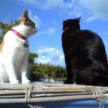 うちの 黒猫のクロち…