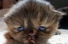 目付きの悪い猫の画像