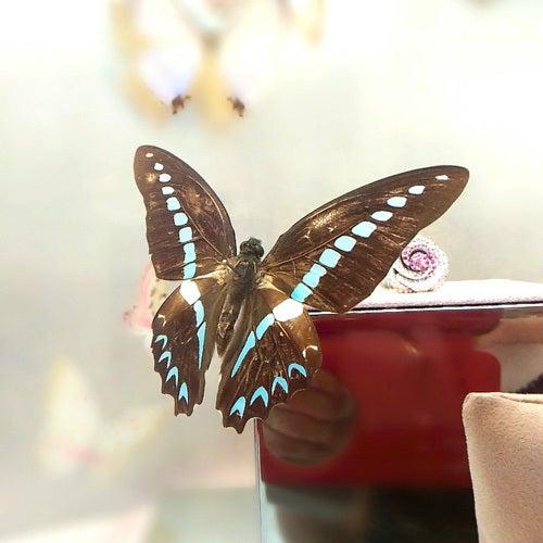蝶をzenfone 2 laser単焦点モードで撮影