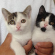 子猫2匹の里親様募集…