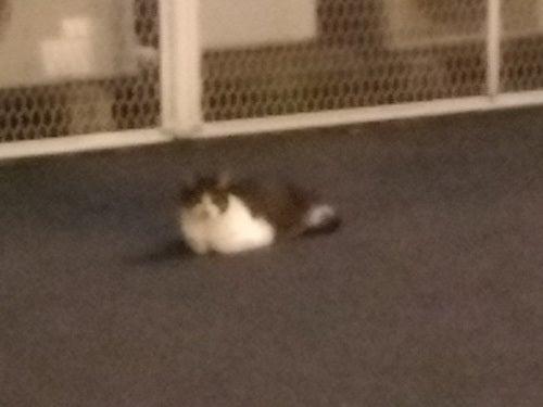 野良ネコをローライトで撮影