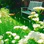 お庭きろく 夏その2