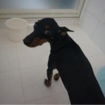 ルーシーお風呂に入る…