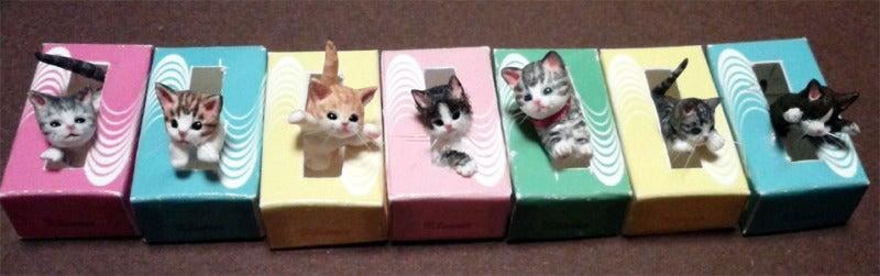 ティッシュボックス猫
