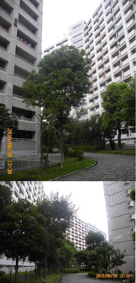 川口芝園1508206161