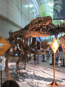 メガ恐竜展2015 5